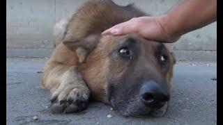 Он просто погладил собаку а бездомный пес ЛЕГ И ЗАПЛАКАЛ…