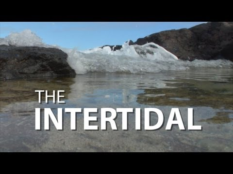 The Intertidal | UnderH2O | PBS Digital Studios