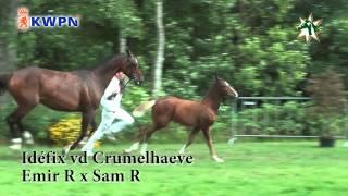 IDÉFIX vd CRUMELHAEVE by Emir R x Sam R
