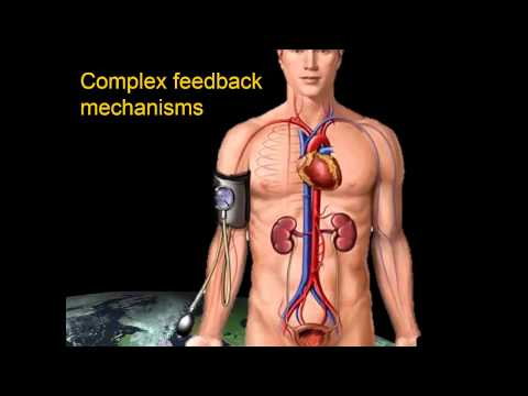 The Cardiovascular System in Space (Mission Discovery 2013)