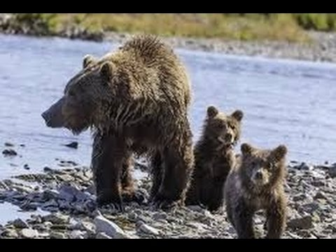 Senate Votes to Allow Hunting of Grizzly Bears in Alaska Refuges