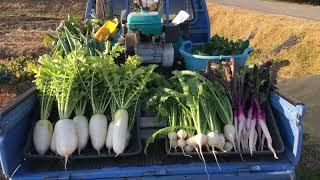 九条ネギ、おでん大根、日野菜、カブ、ターサイ、高菜、人参、ワサビ菜、山東白菜、キクナ、里芋、他です 昔ながらの野菜を無農薬で育ててい...