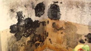 How to Clean Black Mold Abatement? San Jose CA