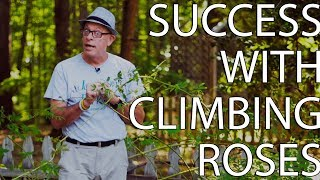 Success With Climbing Roses