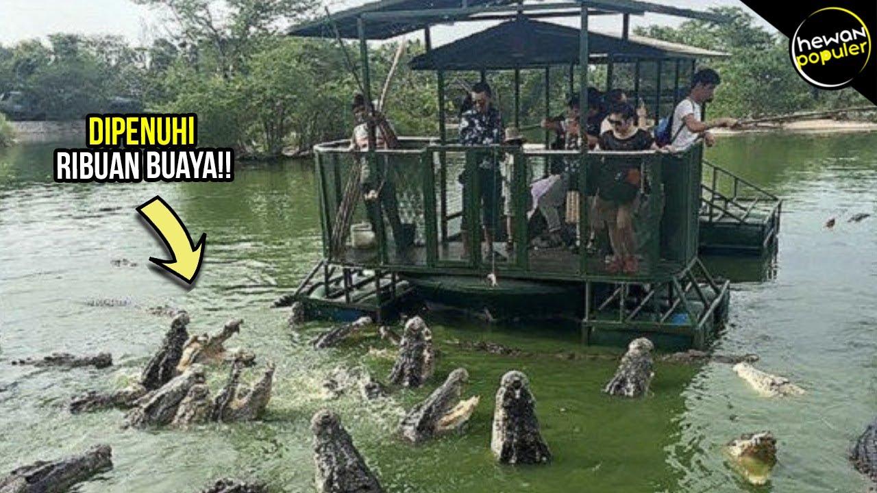 Berani Liburan Kesini!! Inilah Tempat Wisata Berbahaya dan Ekstrim yang dipenuhi Binatang Buas