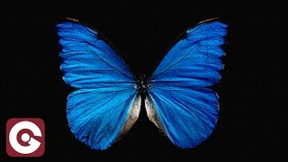 JUMBO P FT CALLUM CROWLEY - Black And Blue