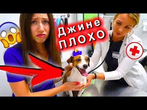 ДЖИНА ПОПАЛА В БОЛЬНИЦУ Моя собака болеет Идем к ВЕТЕРИНАРУ | Elli Di Pets