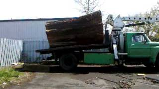 Urban Lumber Company Dumping Big Cedar