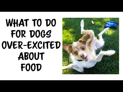 How to train a dog OVER EXICTED by FOOD to be CALM