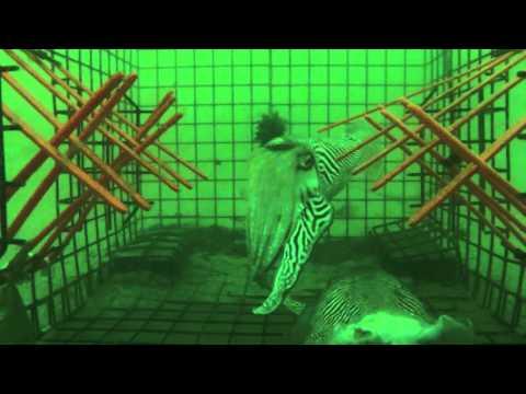 cuttle trap gopro movie