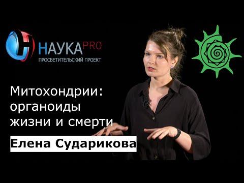 Елена Сударикова -