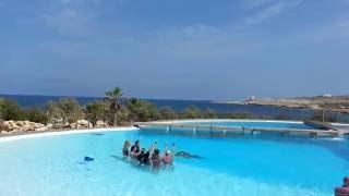 Pływanie Z Delfinami.malta.