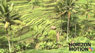 印尼 峇里島 梯田 稻田 Rice terrace in Bali, Indonesia  hm2630000171