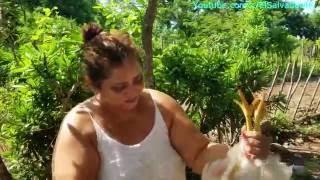 Gladis La Sirenita: Como degollar y desplumar una gallina o pollo para comer Parte 1 thumbnail