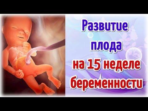 Развитие плода на 15 неделе беременности/Календарь беременности!