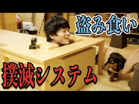 犬の盗み食いを撲滅する方法を思いついた【衝撃】
