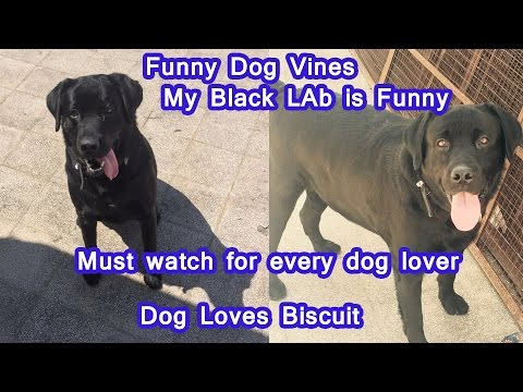 IF DOGS COULD TALK || Doggy Ki Vines || funny cute dog with awesome acting skills