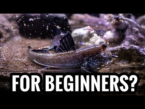 Top 5 Brackish Fish For Beginners