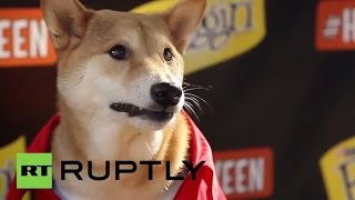 USA: Meet Bodhi, the dog that makes $15,000 a MONTH