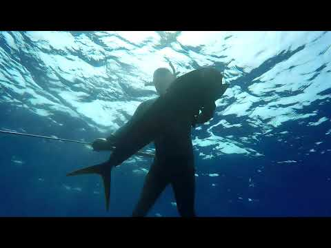 Spearfishing Hawaii (Blue Water)