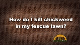 Q&A – How do I kill chickweed in my fescue lawn?