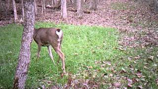 7 or 8 point