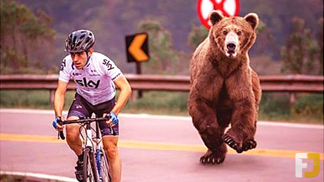 20 Angry Animals Who Chased Down Humans!