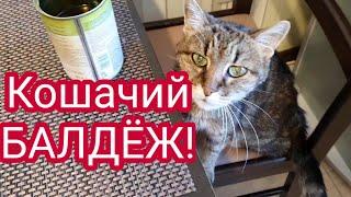 Кошка и Оливки Кошачий БАЛДЁЖ