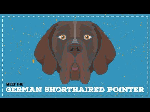 German Shorthaired Pointer | Breed Profile