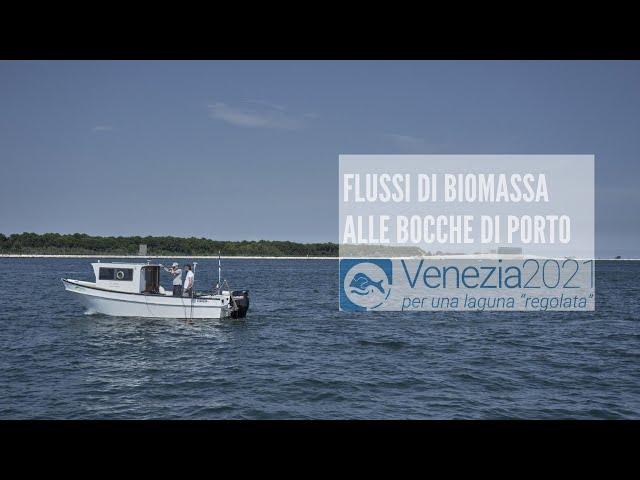 Flussi di biomassa alle bocche di porto della laguna di Venezia
