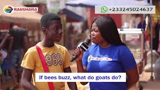 If Bees Buzz, What Do Goats Do? Street Quiz | Funny Videos