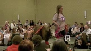 Mini Horse Walks on Fashion Show Catwalk