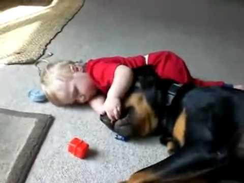 Why rottweilers make good pets