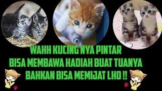 Tanda Kucing Sayang Sama Kita