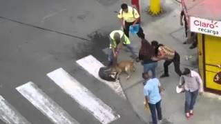 Самая жестокая битва собак!!!