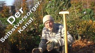 Anleitung zum Anbau und treiben von Chicoree im Garten