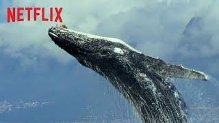 Notre planète | Bande-annonce officielle - version longue [HD] | Netflix