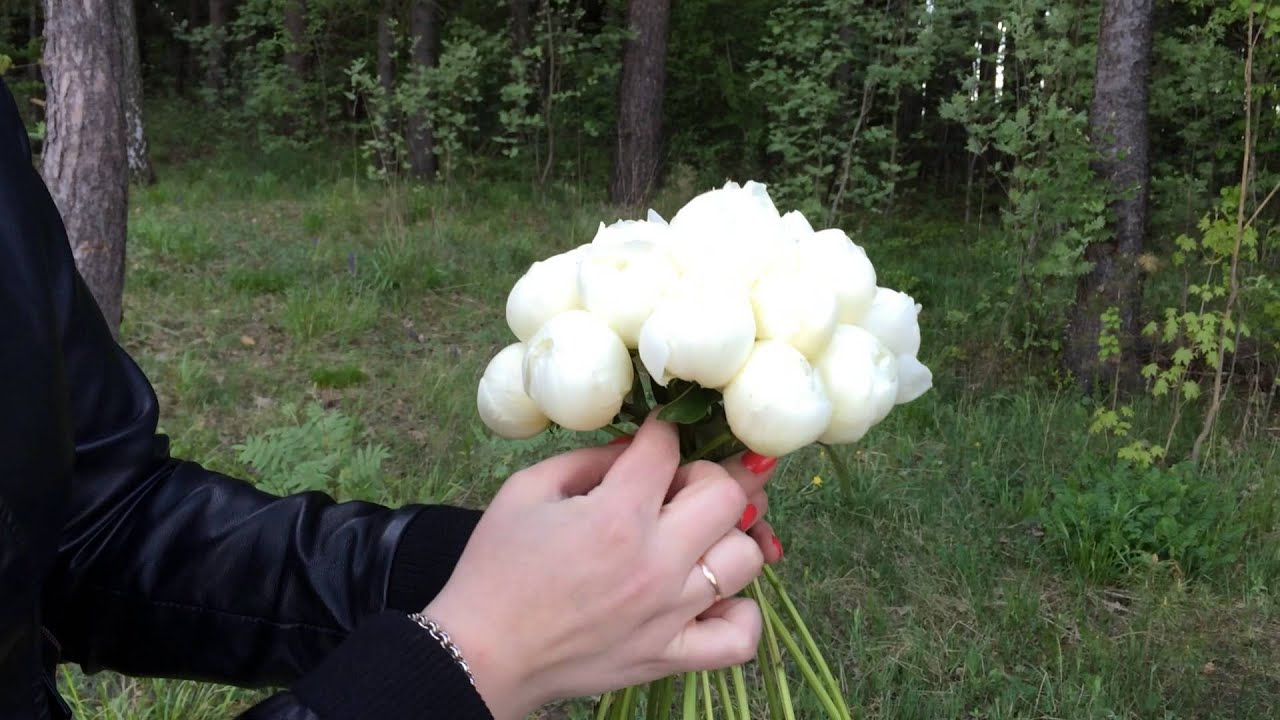 Цветы аукционе собрать букет невесты из пионов своими руками свадебный букет