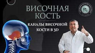 Скачать 3D Анатомия черепа Височная кость Каналы височной кости 3D Anatomy Of The Skull Temporal Bone
