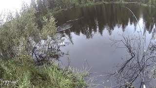 С такими горбачами и щука не нужна рыбалка на красивой Ямальской реке Еты пур