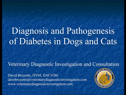 Diagnosis And Pathogenesis Of Diabetes In Dogs And Cats