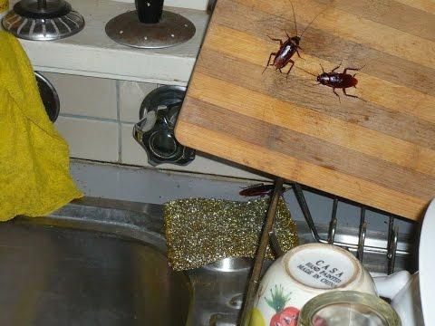 Veneno efectivo para cucarachas el mejor veneno para - Exterminar hormigas en casa ...