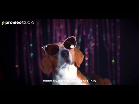 DOGS IN STYLE | #VideoAds For #Facebook #Instagram #Youtube #Exclusive On #Fiverr