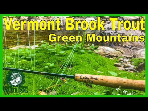 Vermont Brook Trout Fly Fishing With The TFO Lefty Kreh - Green Mountains