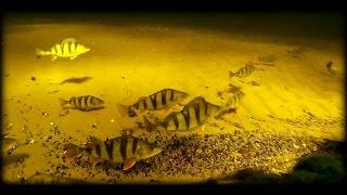 Подводная охота в чистой воде.