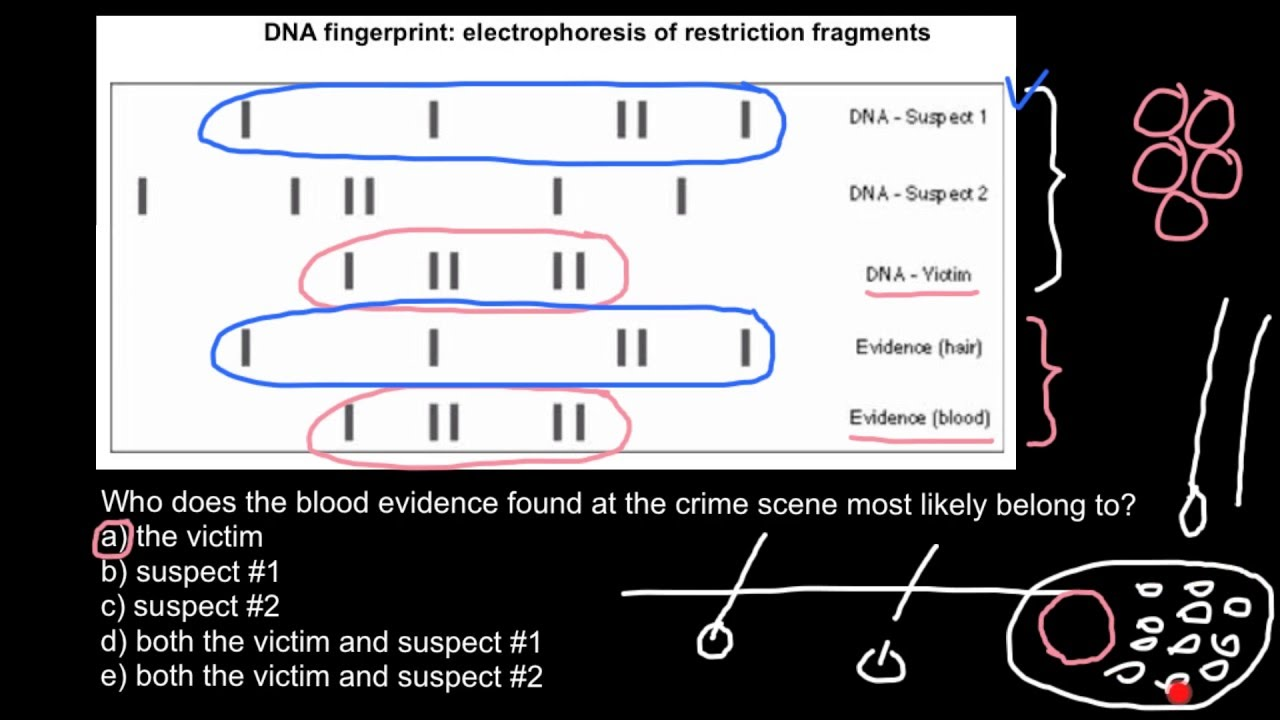 small dna fragments gel electrophoresis