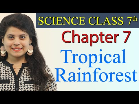 Tropical Rainforest - Weather, Climate and Adaptations of Animals to Climate - Science Class 7th