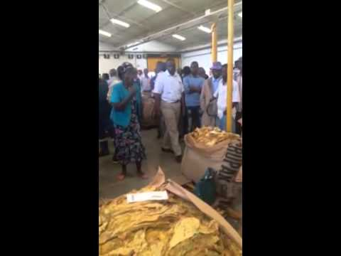 Zim farmer refuses to sell her tobacco for just a dollar