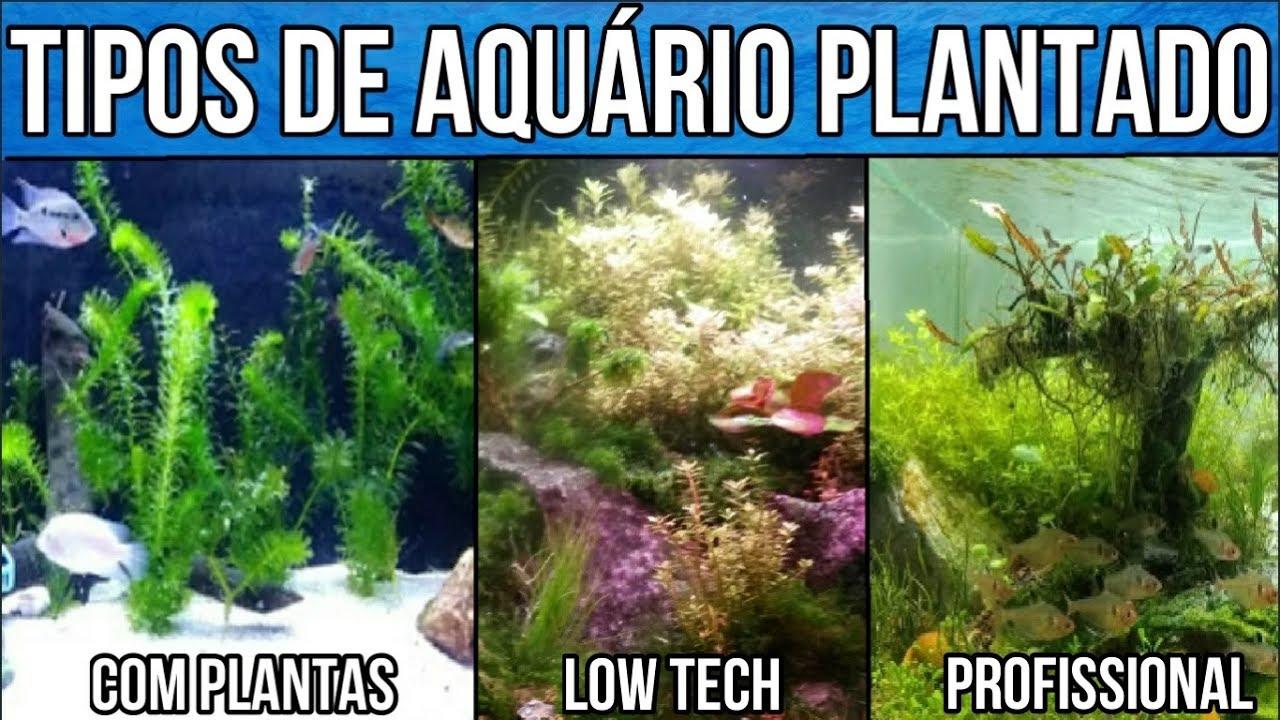 Tipos de  Aquário plantado. Curso de Aquarismo EP#2