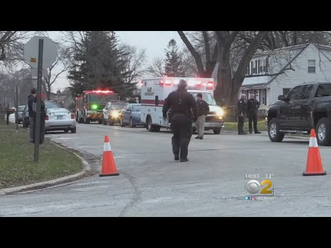 Woman, 77, Mauled To Death By Dog In Alsip
